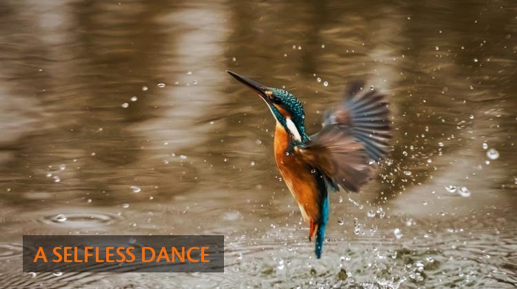 A-Selfless-Dance
